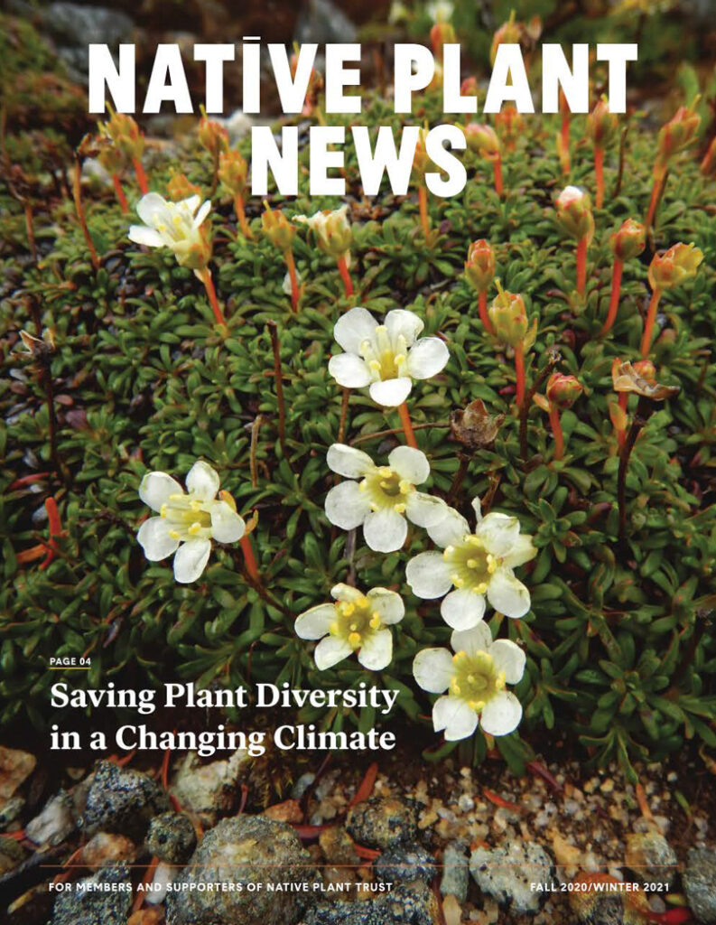 Native Plant News Cover, Fall 2020; Winter 2021